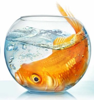 Big Fish in a Small Pond…paysdividends